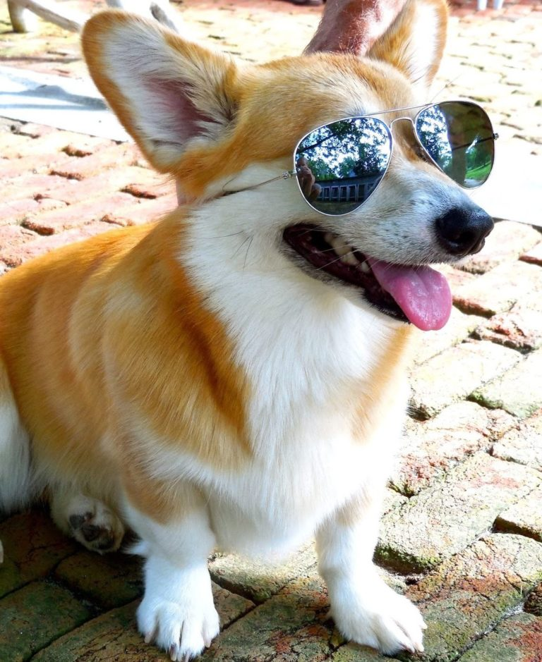 Corgi on the Rocks